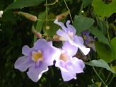 26-Orchideen