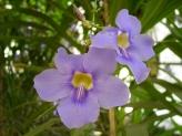 27-Orchideen