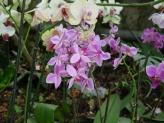 28-Orchideen