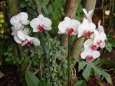 29-Orchideen