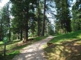15-Weg im Laerchenwaldele